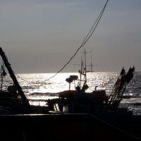 Przystań rybacka ze świeżą rybą